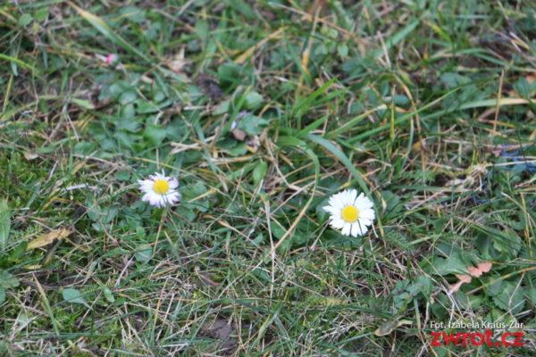 Lednové jaro
