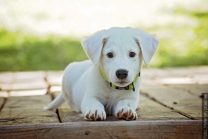 V Karviné bude vybudován psí park