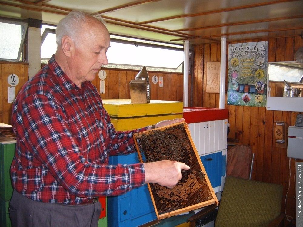 Včely ve službách lidí