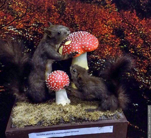 Vúnoru na houby? Pouze do třineckého muzea!