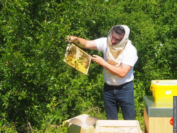 Rekultivovaná část skládky je nyní domovem pro včely