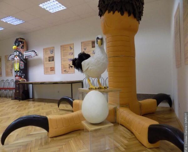 Výstava přibližuje některé druhy ptáků