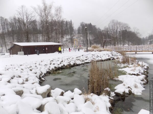 Amuři vyčistí rybník od přemnožené vodní vegetace