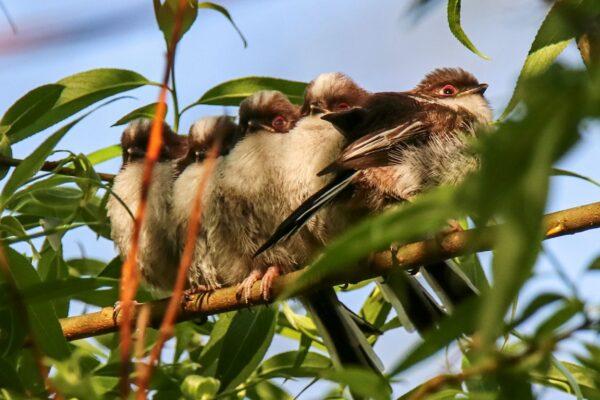 Jak dopadla hnízdní sezona pěvců v ostravské zoo?